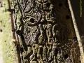 La pell del bosc I