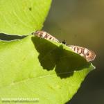 Nova edició del Curs d'iniciació a la fotografia de Natura