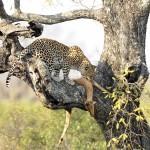 Els divendres de El Visor: Parc Nacional del Kruger