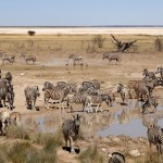 Etosha: From the savanna to the desert of salt