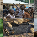 Presentació dels viatges a El Kruger i  Gàmbia-Senegal