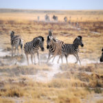Photographing African wildlife
