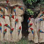 Presentación de los viajes al Amazonas y Senegal