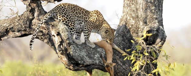 El Visor's Friday's: Kruger National Park