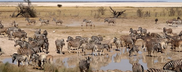 Etosha: From the savanna to the desert of salt