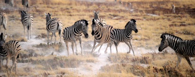 Fotografiando la fauna salvaje africana