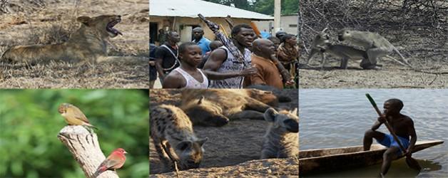 Presentación de los viajes a El Kruger y Gambia-Senegal
